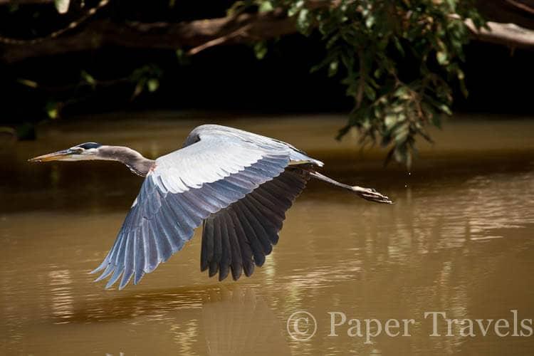 Vogels fotograferen