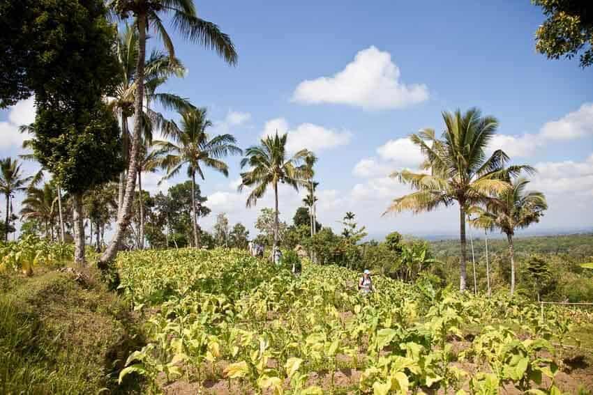 Indonesie landschap