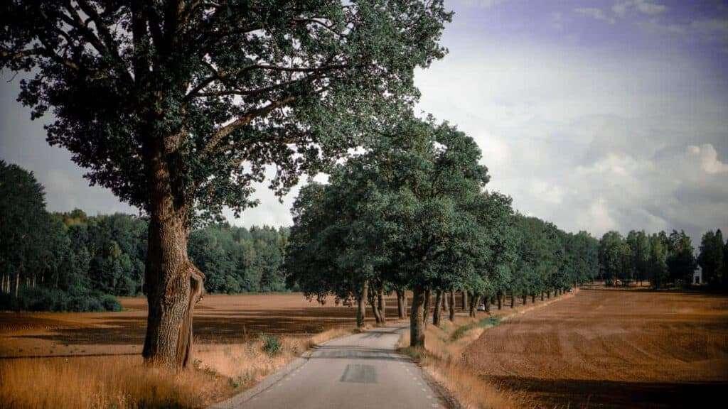 Roadtrip plannen